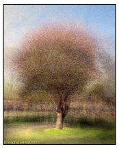 A tree photographed in the round. A photo impressionistic montage © Stephen D'Agostino.