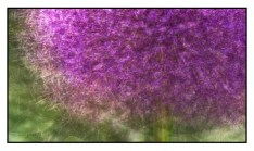 A Purple Allium photographed in the round as an example of photo impressionism. © Stephen D'Agostino