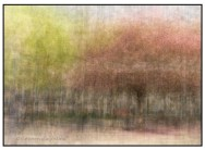 Impressionistic photograph of apple trees in bloom in Toronto's Yorkville photographed using the in the round technique.