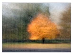 maple tree example of photo impressionism