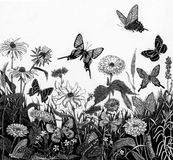 I did this illustration of butterflies and flowers on scratchboard (a chalk-covered board covered with ink and scraped with a sharp tool)