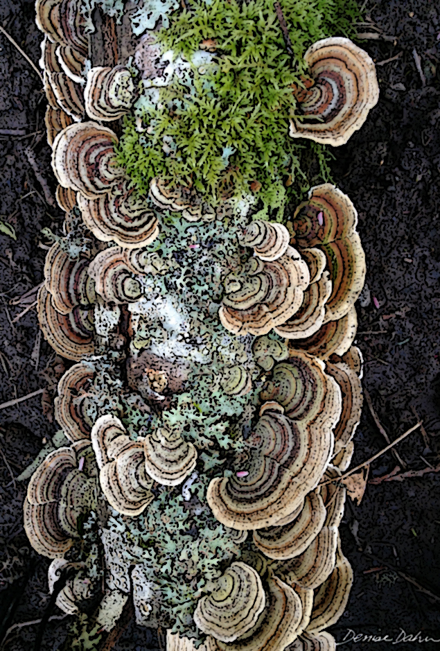 A trio of life on a fallen log: fungus, moss, and lichen. You can't compose a more interesting design that this!