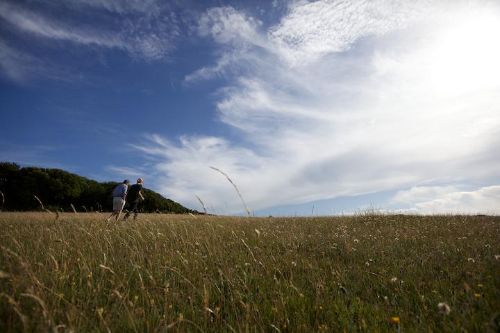 Taskers Meadow