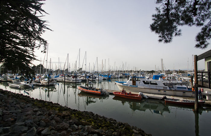 A body was found in the water at Berkeley Marina on Saturday morning.