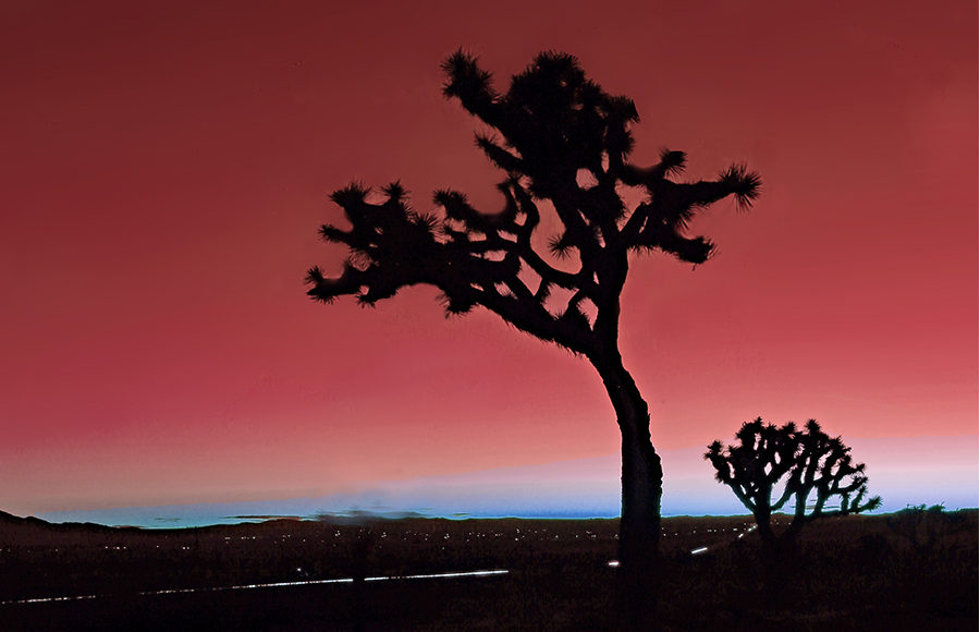 Silhouette of a desert tree in front of sunset as city lights can be seen in the distance.