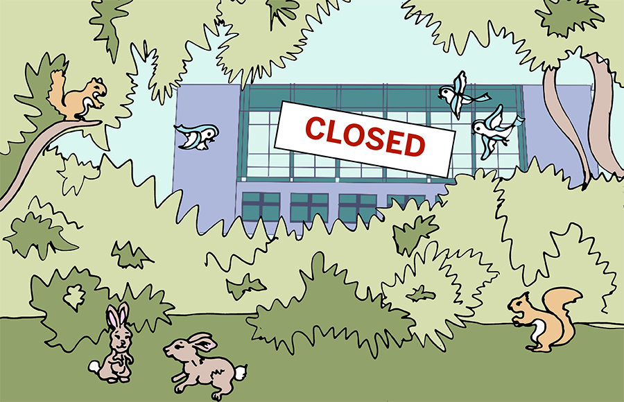Forest with woodland animals, with a building that has a Closed sign behind it