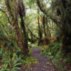A forest in New Zealand