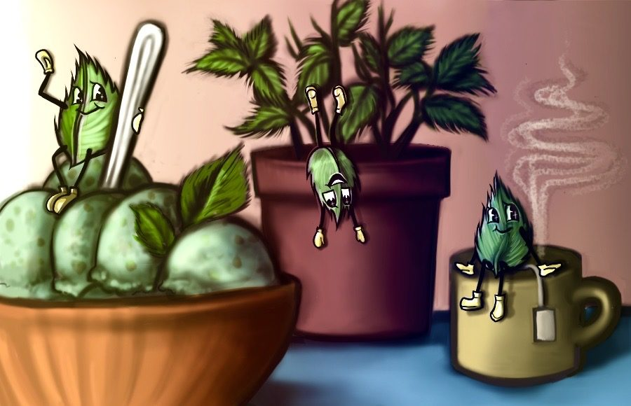 Illustration of several cartoon mint leaves waving playfully from ice cream, a planter, and a mug