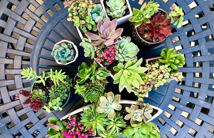 Photo of succulents