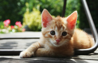 Photo of a kitten