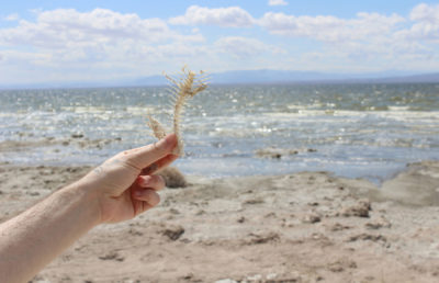 photo of the salton sea