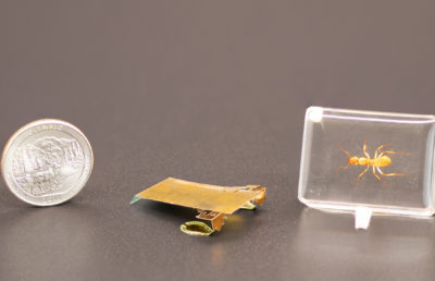 photo of insect sized robot