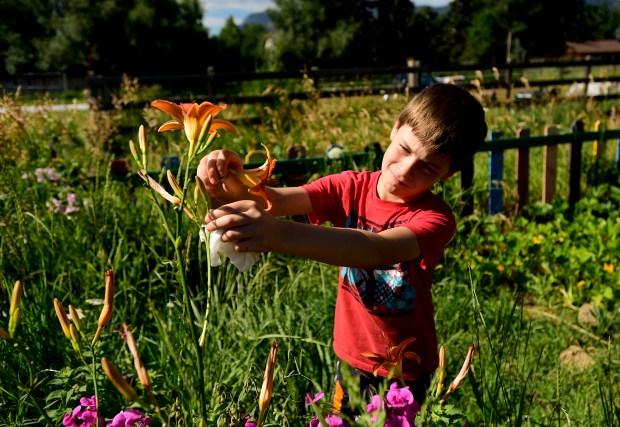 Legend Teller, 8, picks edible flowers ...