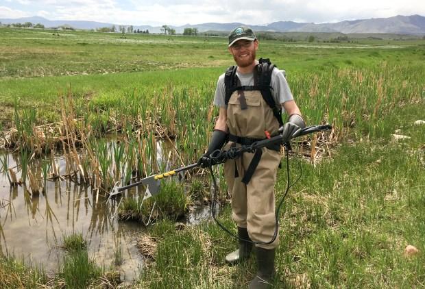 Boulder County agencies fighting invasive American bullfrogs