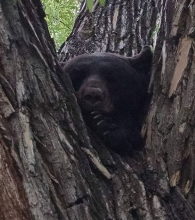 Wildlife officers kill aggressive bear in Boulder