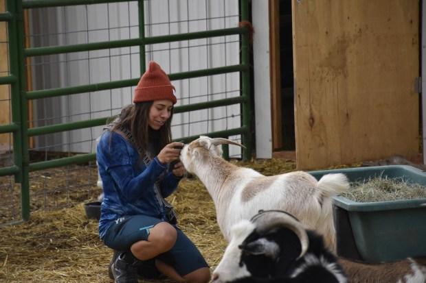 Kelwyn Mcelroy pets a goat