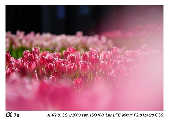 Sony-FE-90mm-f-2.8-macro-lens-sample-images-01