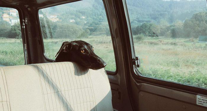 Dog in a car - dailycarblog.com