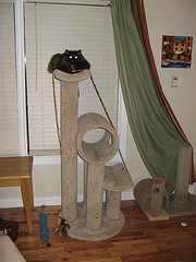 Scratching post jungle