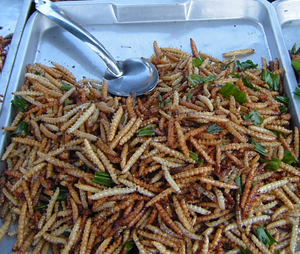 Deep fried bamboo worms on a plate