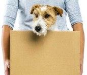 dog moving house