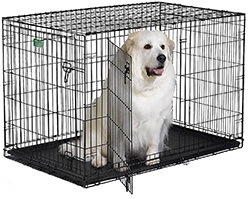 """MidWest 22"""" iCrate Folding Metal Dog Crate with Divider Panel"""