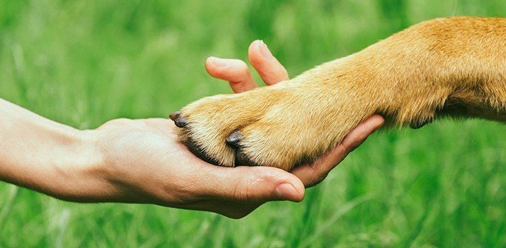 Checking the paw of a dog to see if he is biting his nails