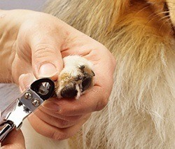 trimming a dogs nail