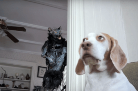 dog vs. zombie cat