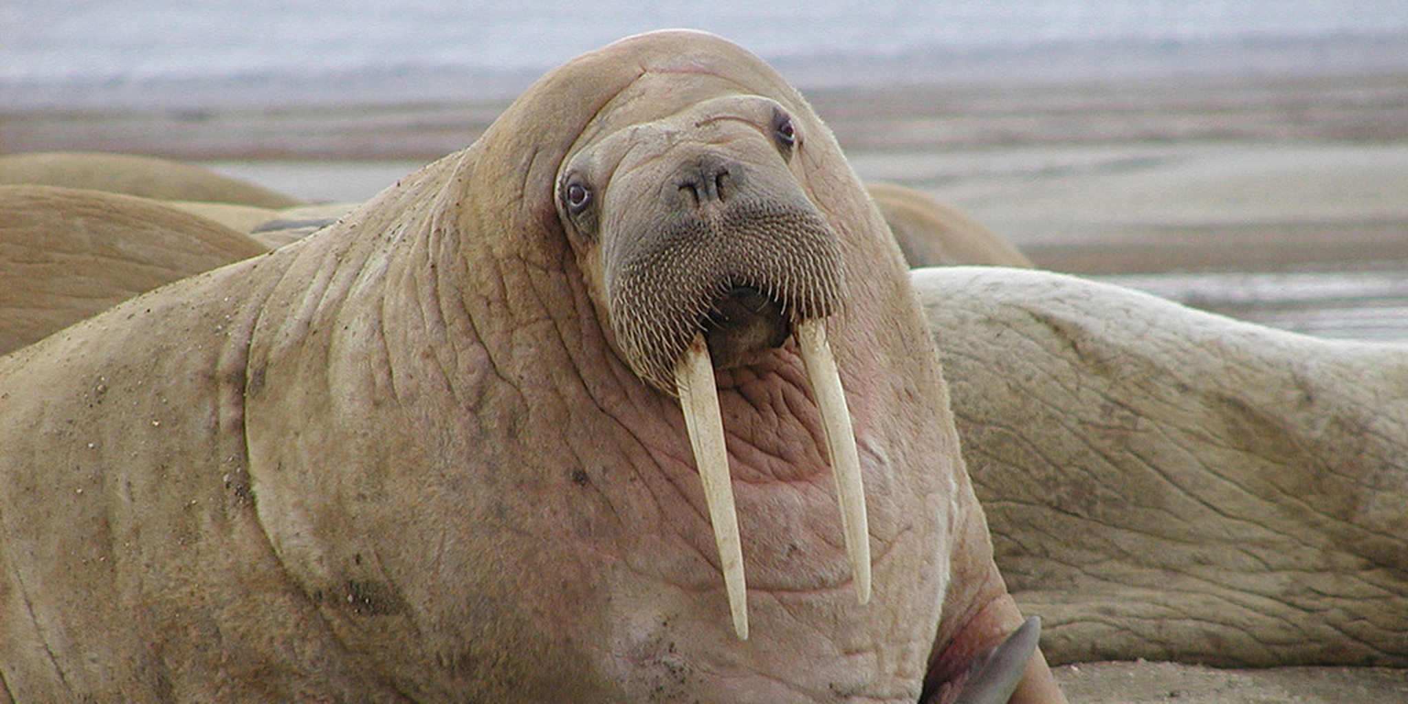 How Reddit Reinvented The Walrus