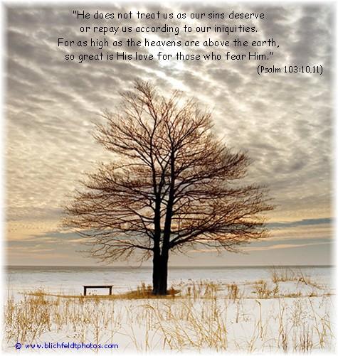 Lone tree on Lake Huron shoreline (photo by Howard J. Blichfeldt)