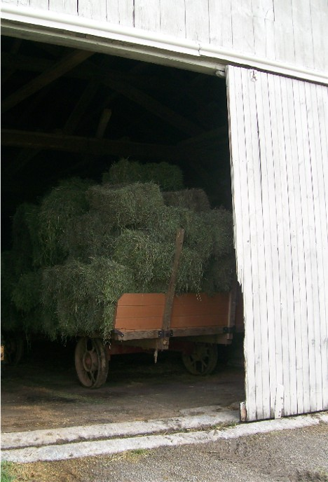 Alfalfa bales on wagon in Amish barn