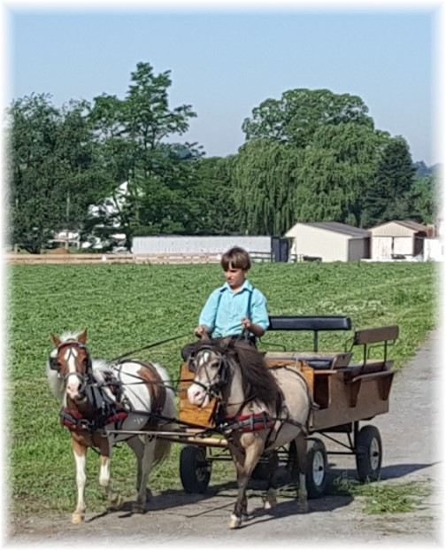 Amish boy with miniature ponies 6/8/17