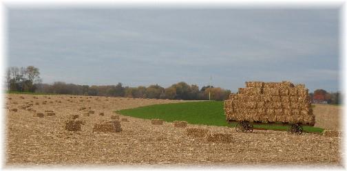 Amish hay field 11/6/13