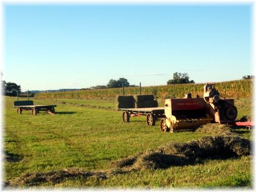 Amish hay harvest