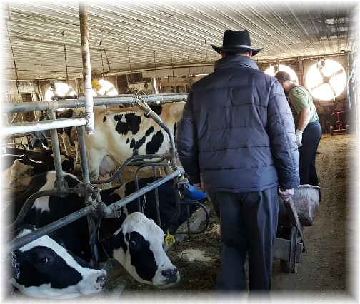 Helping with Amish milk barn chores 3/2/16