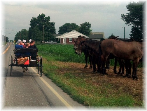 Amish in Lancaster County, PA