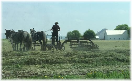 Amish team raking hay near New Holland, PA 4/27/17