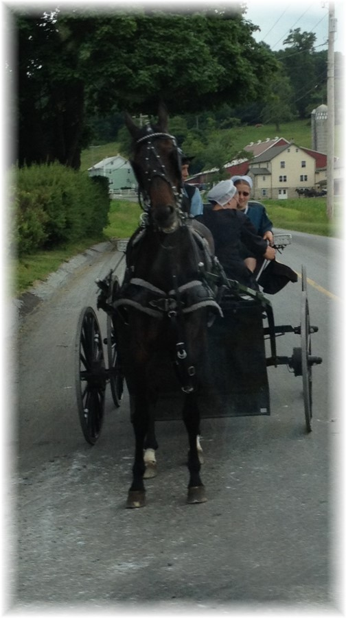 Amish youth on way to youth gathering 6/7/15