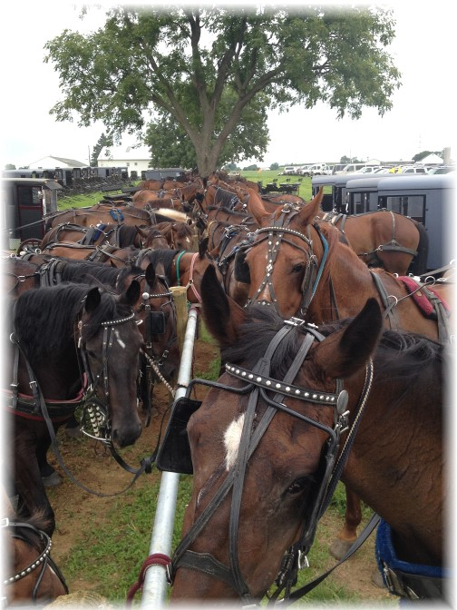 Horses at Haiti Benefit Auction 7/17/15 (Click to enlarge)