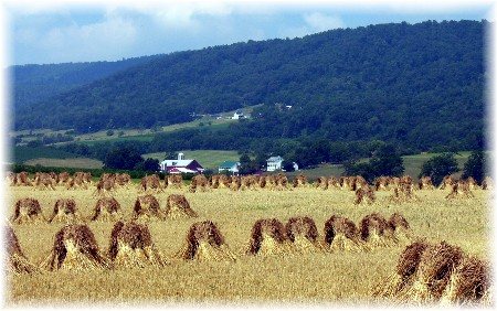 Shocked wheat in Kishacoquillas Valley