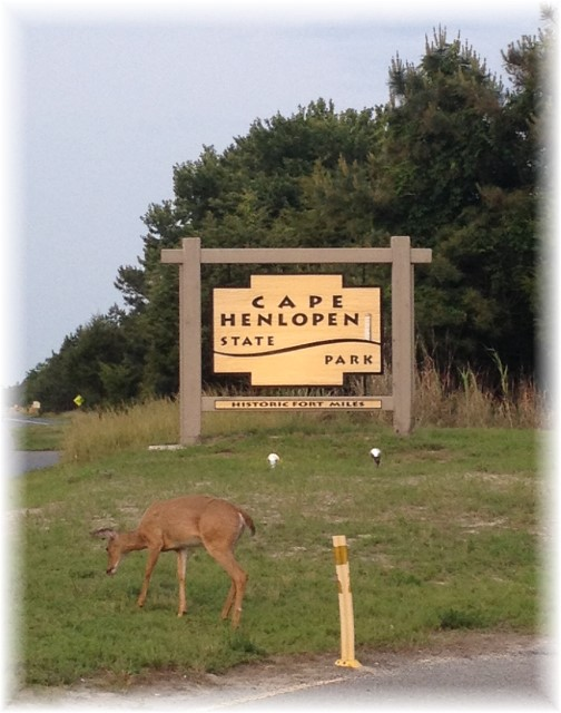 Deer on Cape Henlopen 6/9/15