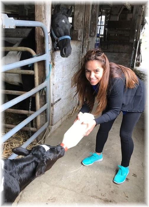 Feeding calf at Old Windmill Farm