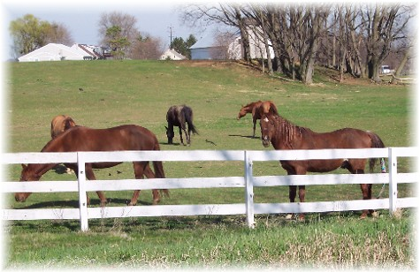 Horses in meadow along Colebrook Road