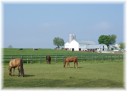 Horses in pasture 5/2/16 (Click to enlarge)