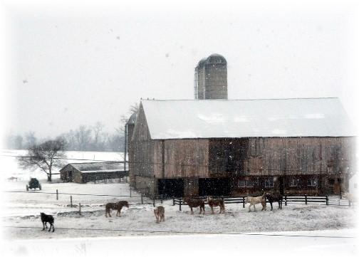 Horses in snow 2/9/14
