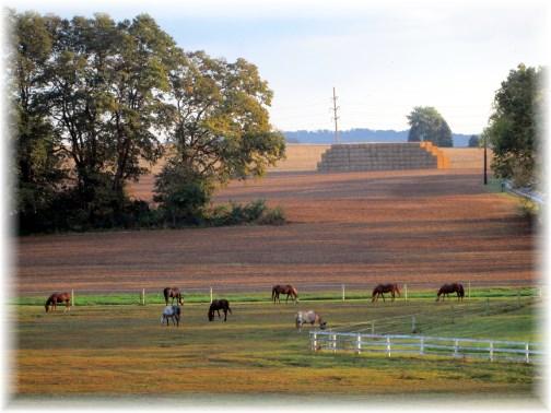 Horse farm on Kraybill Church Road