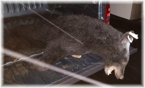 Leon's bear 11/19/16