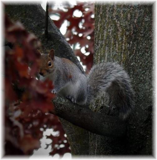 Squirrel (taken by Ester)