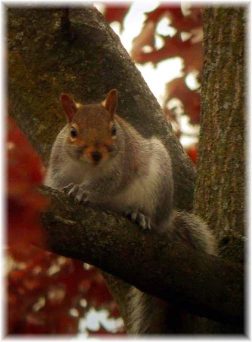 Sguirrel (taken by Ester)